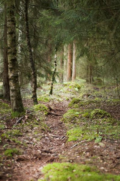 skogen 8 (Medium)